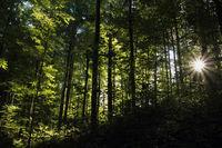 Wald mit Sonnenstern
