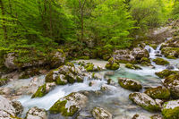 Forest stream in mountains at spring