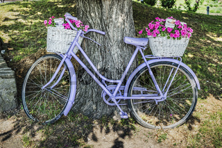 Altes Fahrrad mit Blumen   Old bicycle with flowers
