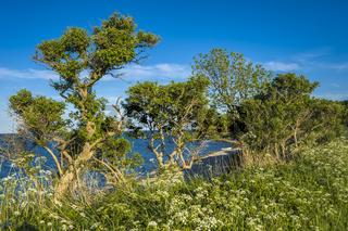 An der Steilküste Staberhuk auf der Insel Fehmarn