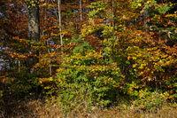 Herbstwald, Bunte Herbstimpression im Wald