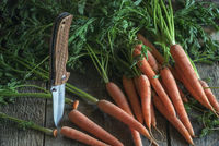 Bunch of freshly harvested carrots on a table