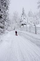 Schlittentour in verschneiter Landschaft