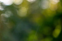 A natural blurred background of a bokeh made from green trees on a summer day.