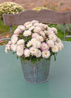 Vintage flower pot on a table in the garden