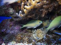 Fische mit Korallen und Anemone