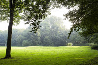 Green meadow with morning light in a park, beautiful landscape