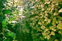 Sun Rays Shining Through Green Bush Leaves Forest Plants