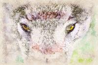 Digital artistic Sketch of a Wolf