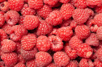 Red and Ripe Raspberries as a Background.