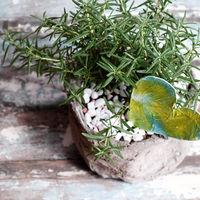 Rosemary pot with heart
