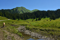 Kanisalpe mit Kanisfluh im Bregenzerwald bei Mellau