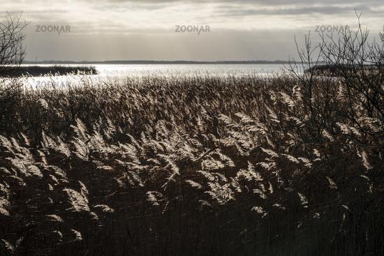 Achterwasser auf Usedom, Mecklenburg-Vorpommern, Deutschland