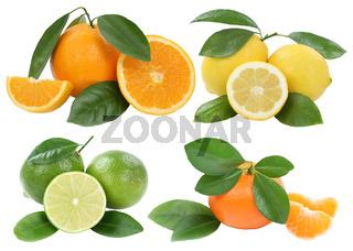 Collage Orangen Zitrone Mandarine Früchte Freisteller freigestellt isoliert