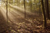 Forest with light rays