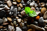 Plant sprout in pebbles background