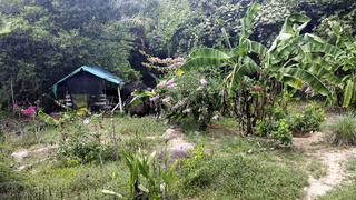 a small hut in the jungle