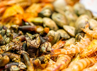 Langoustines, barnacles and other shells at seafood market