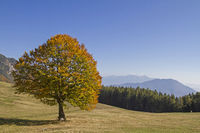 Goldener Oktober im Monte Bondonegebirge