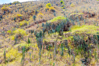 typical vegetation of the Chicamocha canyon Los Santos Colombia