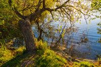 Bäume am Prerowstrom in Prerow