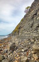 The Blue Lias of the Chippel Bay. West Dorset. England