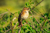 Sparrow on a branch. Sparrow branch bird animal wing feather flight fly little tree sky blue