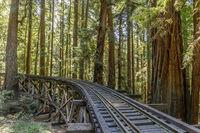 Steam Train Railroad and Trestle Bridge over Redwoods.