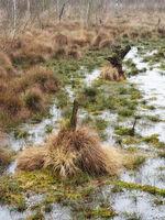 Totes Moor - Wasserfläche zwischen Gräsern, Deutschland