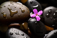 Grey wet pebbles with flower background
