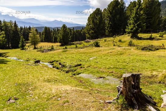 Almwiese in Südtirol, Italien, alm meadow, South Tyrol, Italy