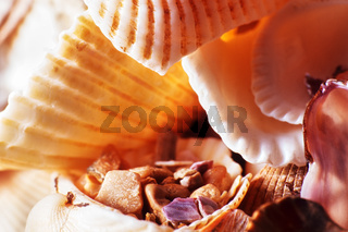 Pieces of shells and rolled stones