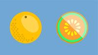 Cantaloupe Melon Banner Vector