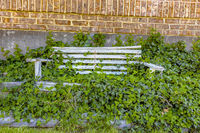 Wooden bench with lush vegatation, centered