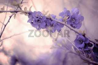 branch with purple blossoms in pastel ambience