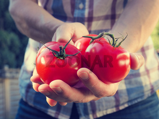 Young man with fresh organic tomatoes