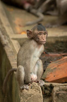 Baby long-tailed macaque sit on concrete wall