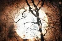 Sunset sun through telescope through silhouette of bare tree