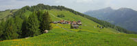 Obermutten, village situated on a hill top. Green Meadow with yellow Flowers.