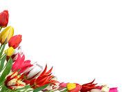 Blumen 1041