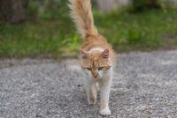 frei laufende braune Katze auf einer Strasse - Straßenkatze