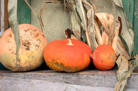 Pumpkin for decoration on wood