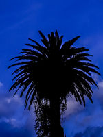 Palm Tree Silhouette Night Scene