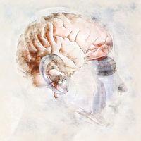 Digital artistic Sketch of a human Brain