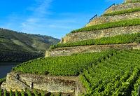 Terrassenförmige Weinberge mit Trockenmauern aus Stein, Höllen-Tal Weinberg, Douro Tal, Portugal