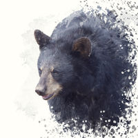 Black Bear portrait watercolor painting