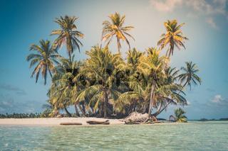 tropical island - palm tree, beach and ocean