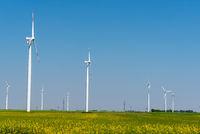 Einige Windkraftanlagen in einem blühenden Rapsfeld