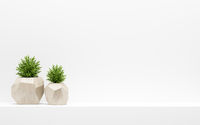 green plants in wooden pots on white shelf. 3d illustration