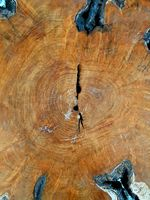 stump of oak, section of the trunk with annual rings, tree trunk background texture
